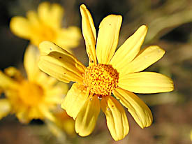 yellow wildflower picture